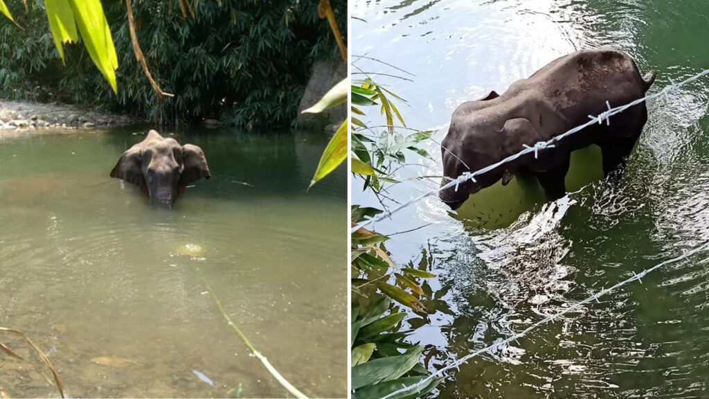 Kerala Elephant news